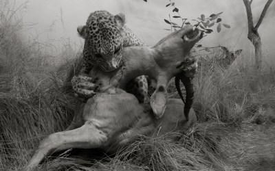 La mort de l'antilope (détail)