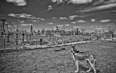 loup sur la ville…