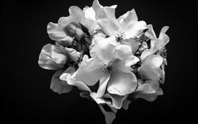 1 an sur LVEG, je me jette quelques fleurs …