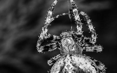 Arachnée