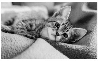 Dans l'oeil du chat !