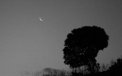 Quand un arbre a RDV avec la lune