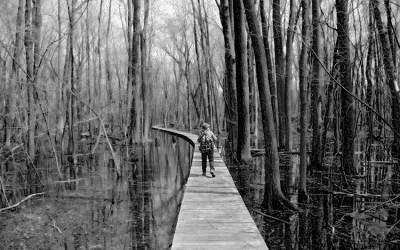 La forêt désenchantée
