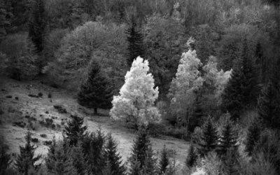 Les petits arbres d'en face #7
