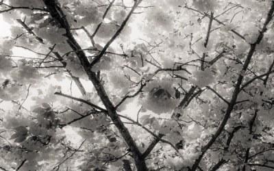 Branches d'arbres ( suite 2)