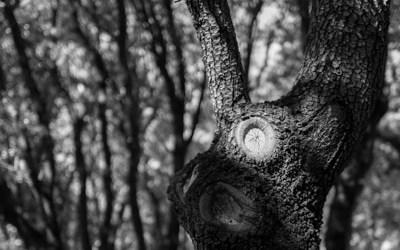 L'œil de l'arbre
