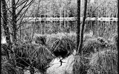 La queue du lac