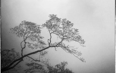 L'automne .2.