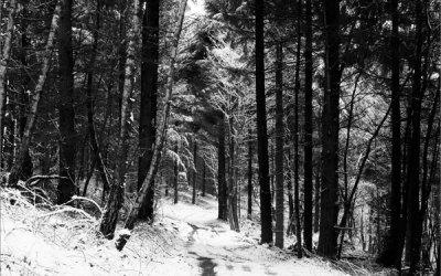 Des arbres droits