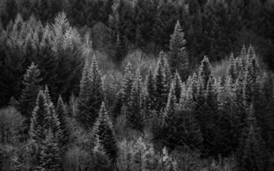 Les petits arbres d'en face #11