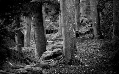Le bois des Seigneurs
