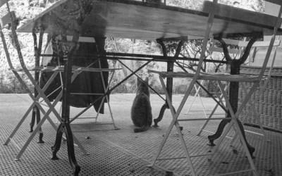 Moustique chat de garde.
