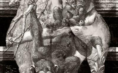 Le singe descend de l'homme