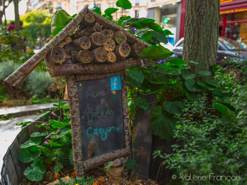 Le jardin du collectif «Aux arbres citoyens»