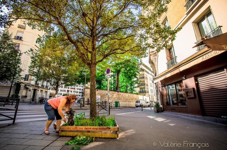 Végétaliser un pied d'arbre à Paris : découvrez celui de Carole