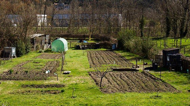 Jardin partagé à Alès