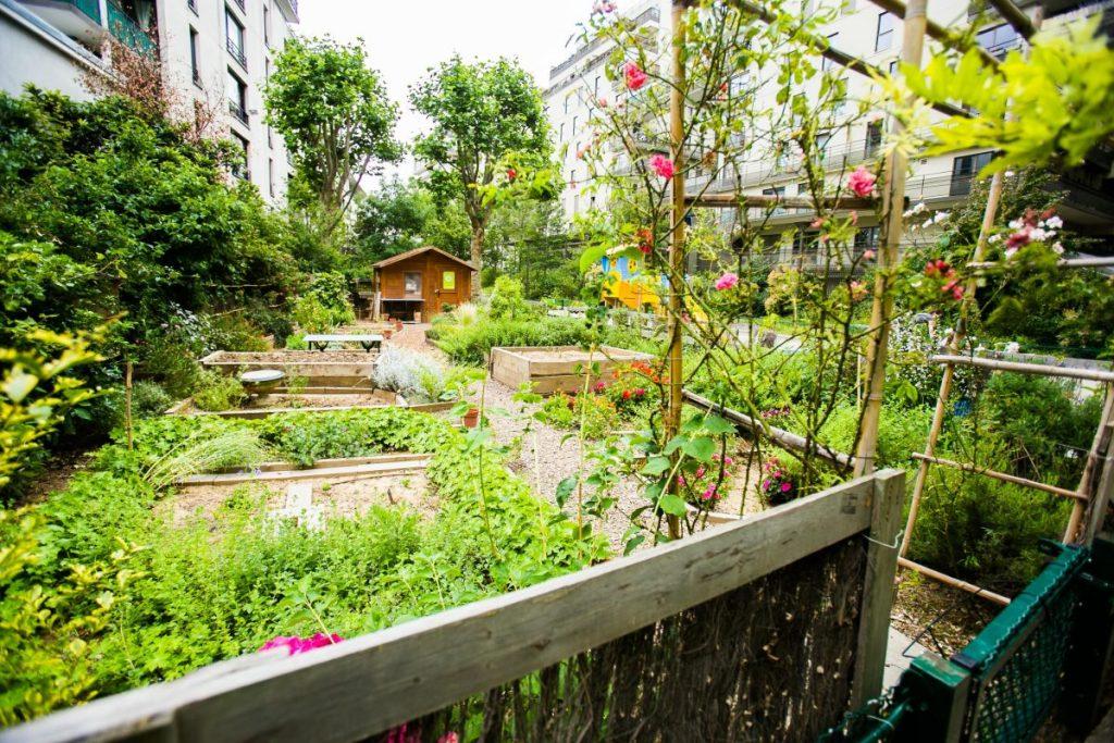 Jardin Partagé Ombre et coccinelle