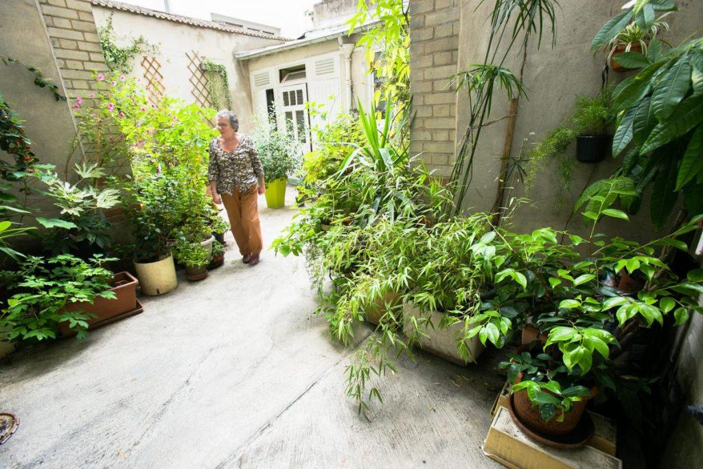 végétaliser une cour d'immeuble
