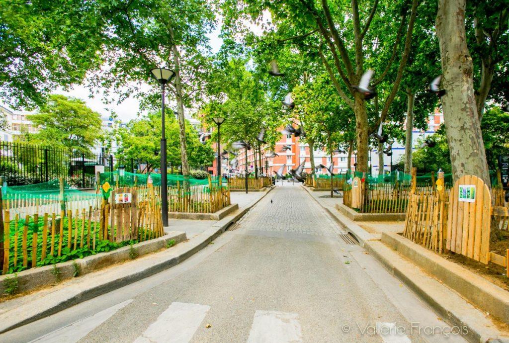 Les pieds d'arbre végétalisés - rue Saint Bernard
