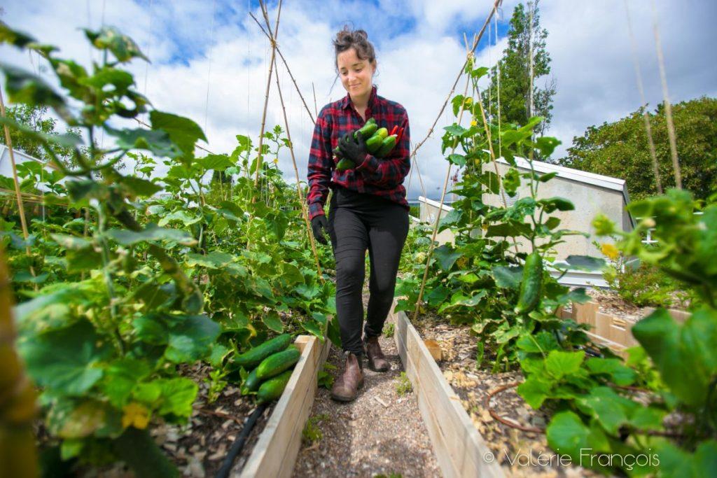 Elise ramasse les courgettes dans la ferme urbaine Suzanne.