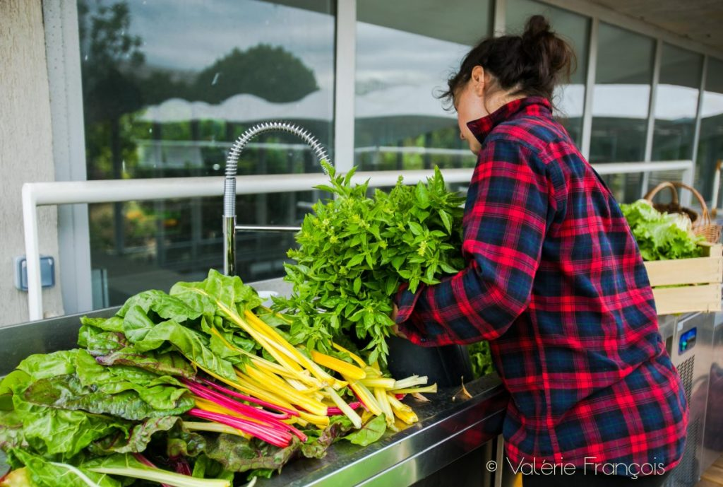 Elise lave la montagne de salades, de blettes et de basilic.