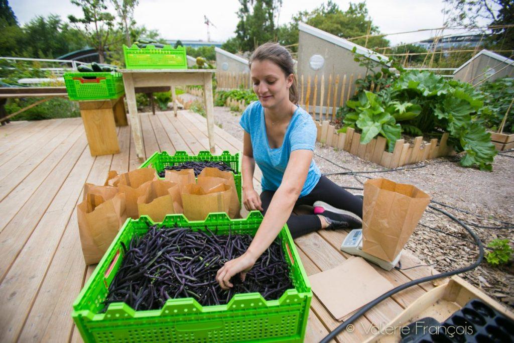 Juliette s'est installée par terre pour préparer les paquets de haricots.