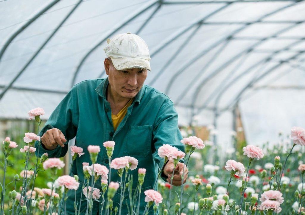 Halage a 100% de réussite de retour à l'emploi pour les salariés en réinsertion qui travaillent avec les fleurs.