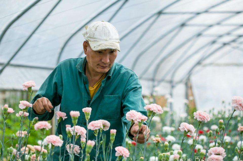 Halage : l'insertion par les fleurs locales et de saison