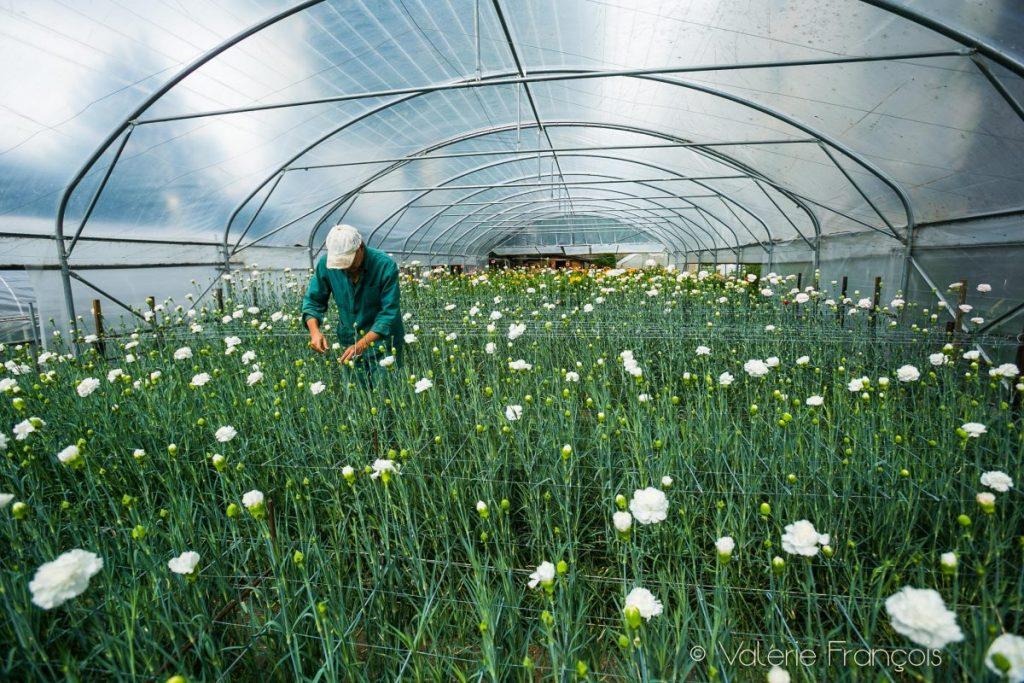 Production de fleurs locales et de saison sur l'Ile-Saint-Denis - association Halage