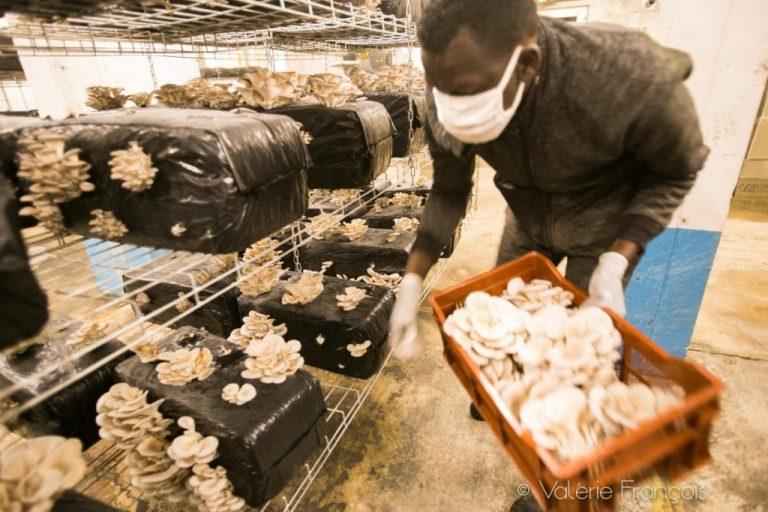 Récolte de champignons à la Caverne