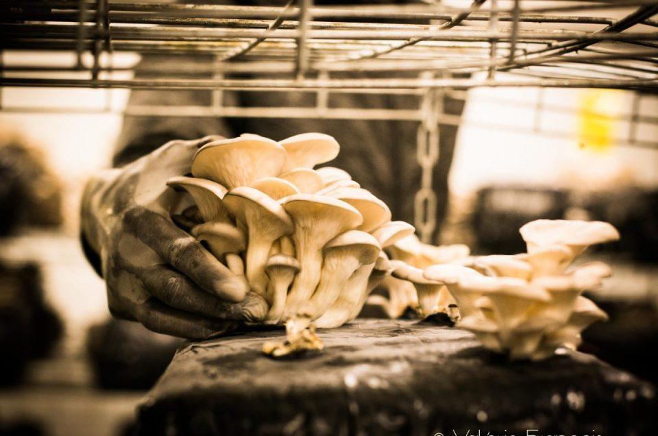 Sous les pavés de Paris… des champignons