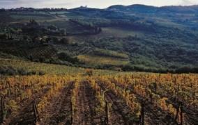 Gli articoli che hanno fatto la storia di LaVINIum: Sodi di San Niccolò: 11 annate per un grande vino del territorio