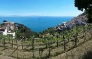 Vigne di Raito a Vietri sul mare, il sogno di Patrizia: un tuffo dove l'acqua è più blu