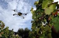 Riscaldamento globale e vendemmia anticipata: presente e futuro della viticoltura italiana