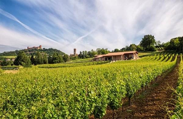 Le vigne di Finigeto