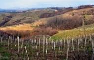 Taste Alto Piemonte 2018: vigne, vini e persone