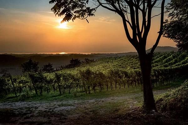 De Buris Vineyard
