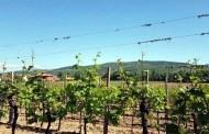 Bressan Mastri Vinai: gli incisori di zolle dell'Isonzo