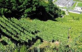 Un gustoso Valtellina Superiore: Il Pettirosso 2015 ArPePe