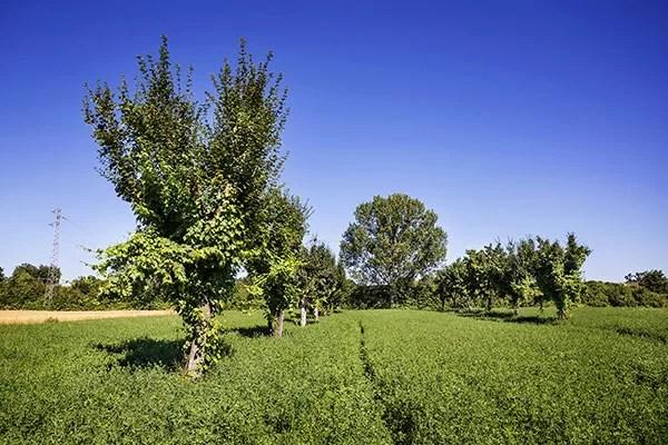 territorio del Trebbiano Spoletino