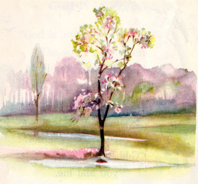 An Apple Tree in Blossom Song of Solomon 2:3