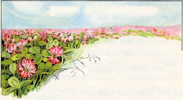Field of red clover - border