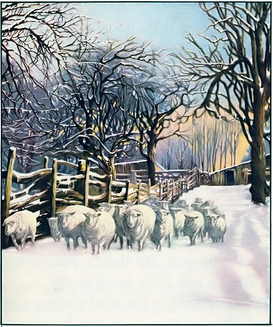 A flock of sheep in the winter snow