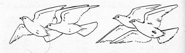 Sketch of doves flying