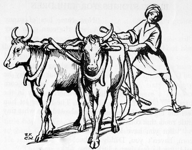 Plowing with Oxen (Luke 14:19)