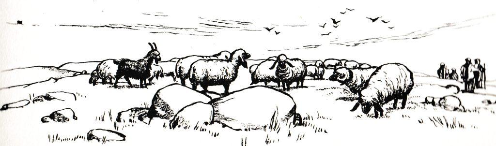 The shepherds left their flocks (Luke 2:15)