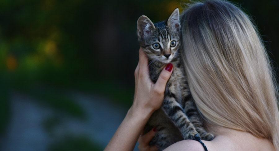 Il significato spirituale di un gatto che ti sceglie