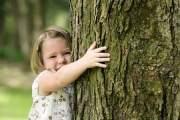 Albano non è una città per gli alberi