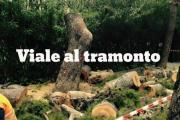 Albano, alberi da salvare