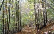 Boschi: Rocca di Papa si pone a tutela del patrimonio forestale e del settore del legname